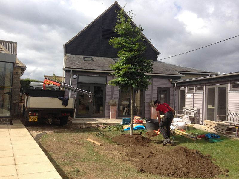 Tree Planting - Beech Tree in Woodstock