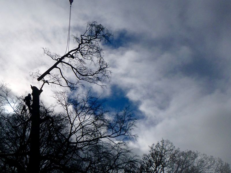 Tree Removal (With Crane) - Beech Tree in Deddington